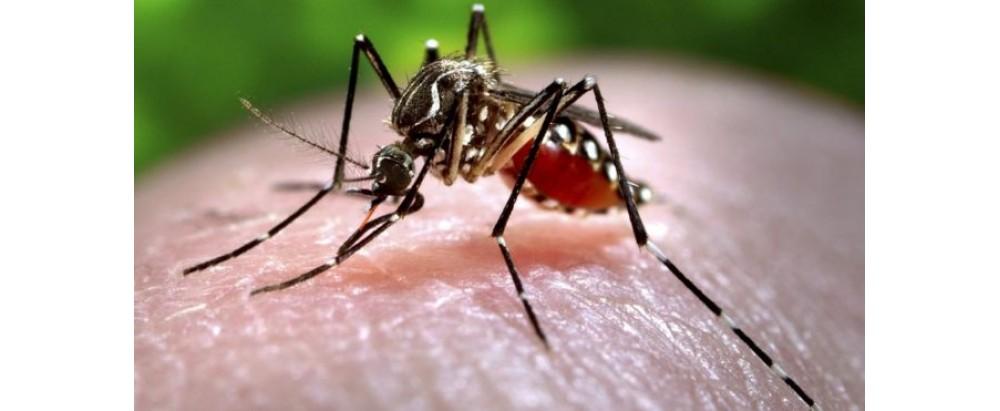 Key Facts About Chikungunya (चिकनगुनिया)