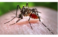 Key Facts About Chikungunya (चिकनगुनिया)